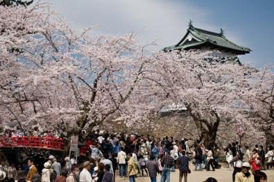 히로사키 벚꽃 축제
