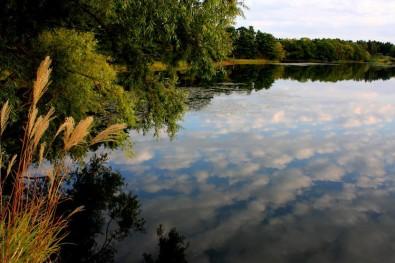 野木和公園の湖