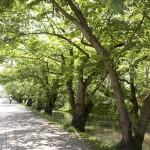 弘前城と弘前城植物園の無料開放日!