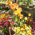 2013年6月~10月の弘前城植物園散策ガイド
