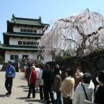 弘前さくらまつり 弘前城