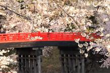弘前城(弘前公園)「杉の大橋」