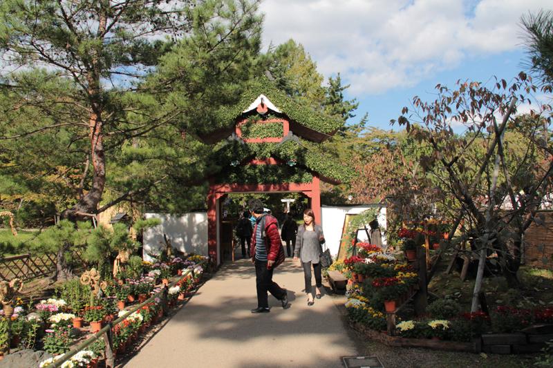 会場に入ってすぐに振り返ると美しい門と菊5