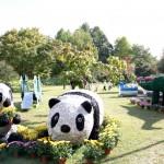2013年の弘前城菊と紅葉まつりが開催中!