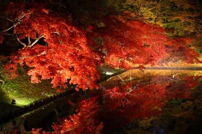 2013年の弘前城菊と紅葉まつり