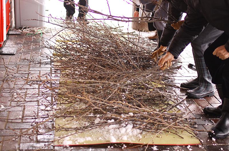 弘前公園の桜の剪定枝の無料配布