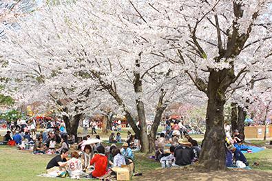 弘前公園(弘前城)でのお花見