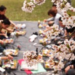 弘前公園(弘前城)の桜を楽しもう!お花見の楽しみ方