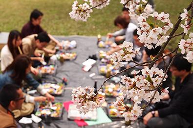 弘前公園(弘前城)でのお花見の楽しみ方