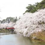 弘前公園カメラ部 おすすめ撮影スポット紹介vol.1【杉の大橋】