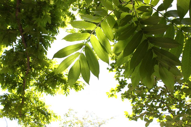 9月の弘前城植物園散策ガイド