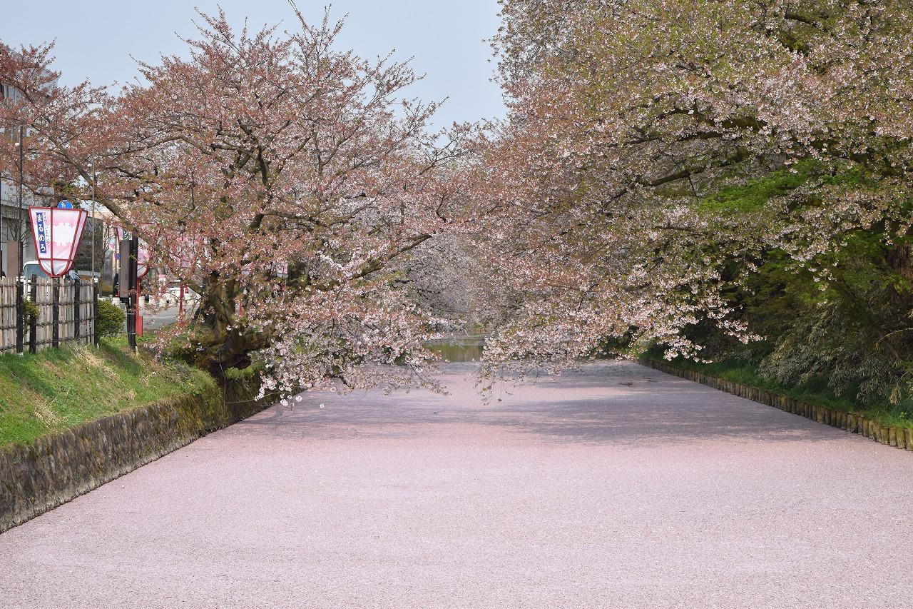 弘前公園 桜 花筏