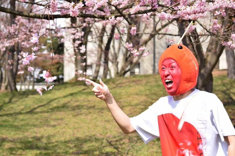 ひろさきさくらまつり 桜