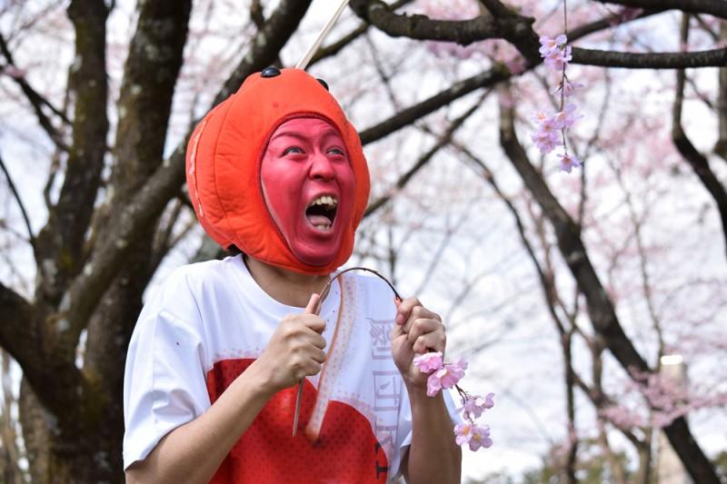 弘前さくらまつり 桜の枝