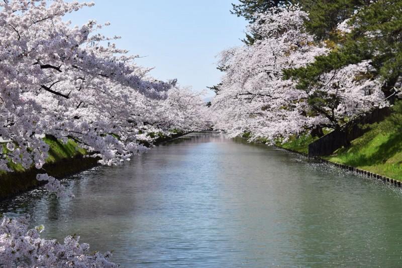 弘前公園 追手門(弘前城)