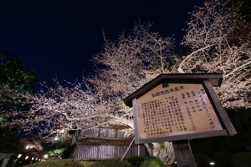 弘前さくらまつり 日本最古のソメイヨシノ