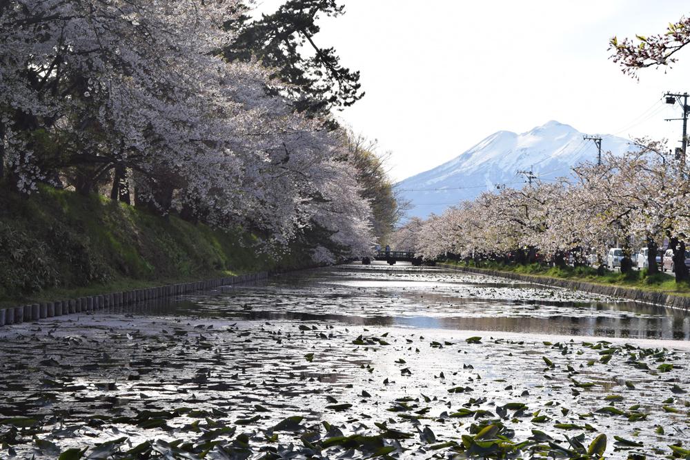 ねぷた村付近・岩木山