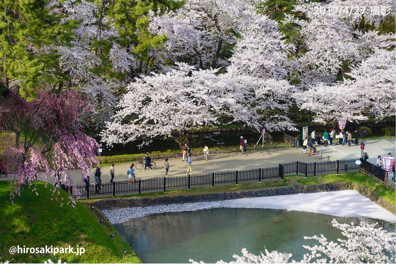 2017年 弘前公園外濠の様子