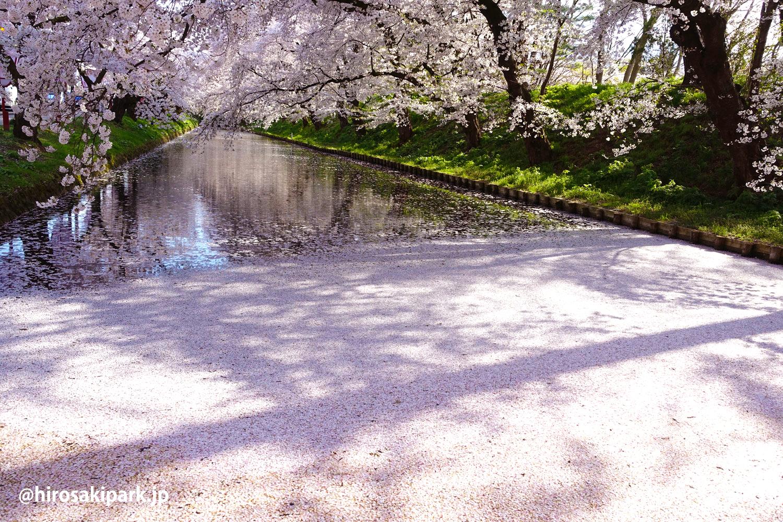 弘前公園花筏(はないかだ) 2017年