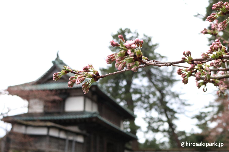 弘前公園・北門(亀甲門)