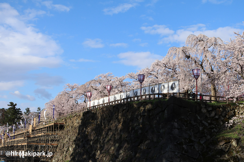 弘前城 石垣沿いのさくら