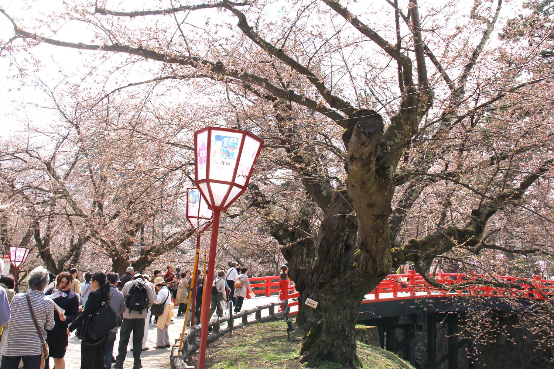 弘前公園 観光客