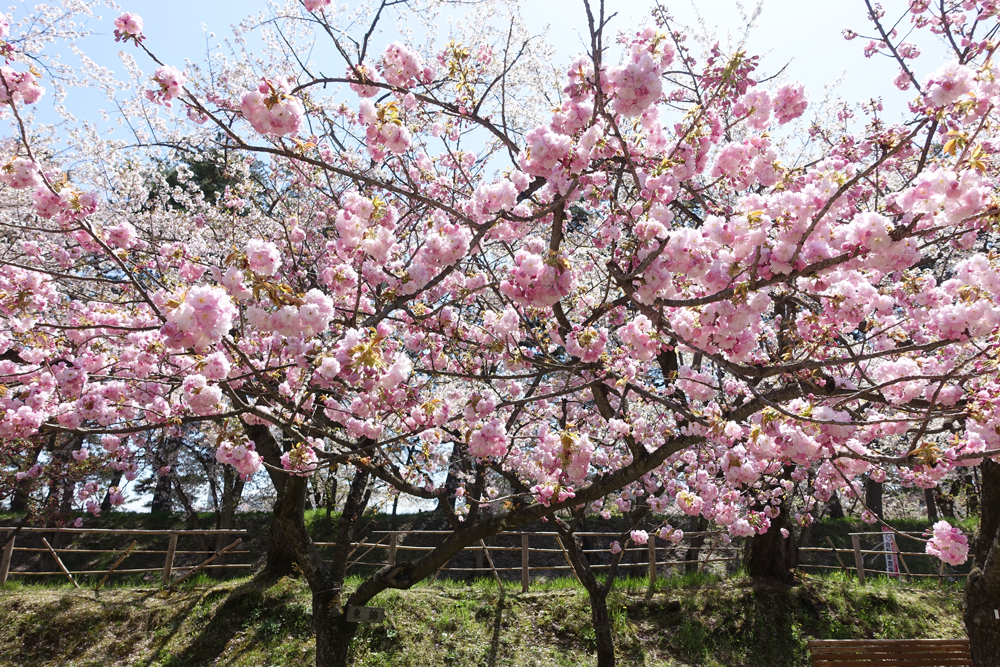 弘前公園(ピクニック広場)・東錦