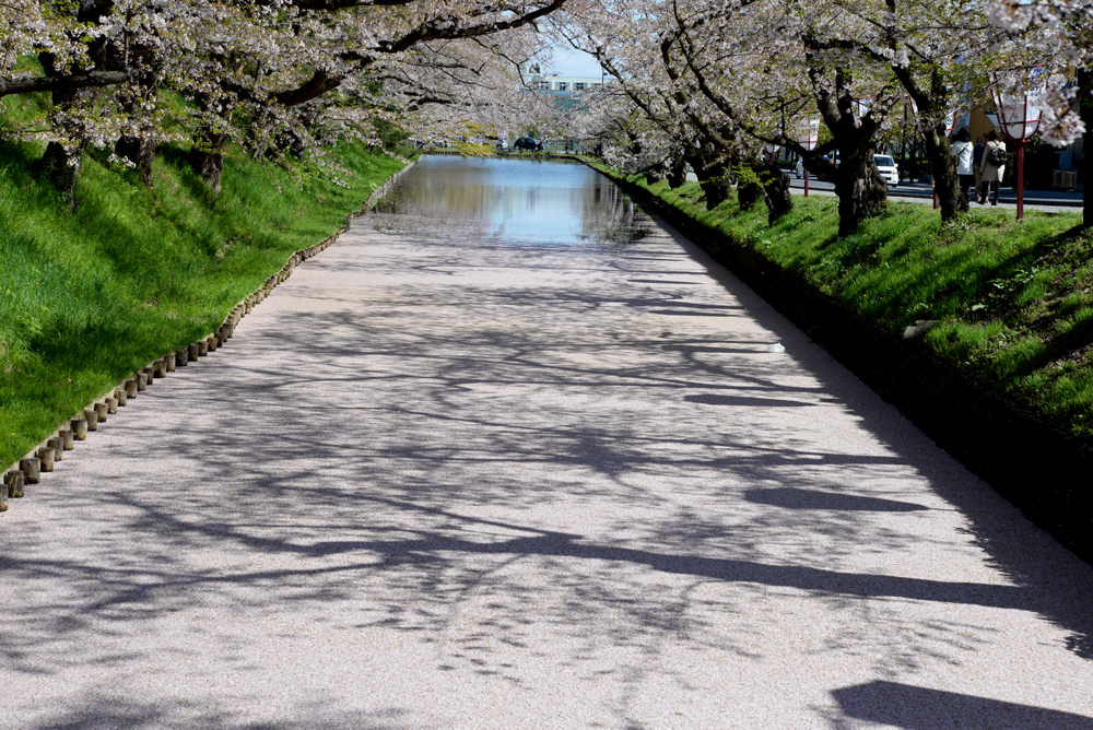 弘前公園の花筏(弘前さくらまつり)