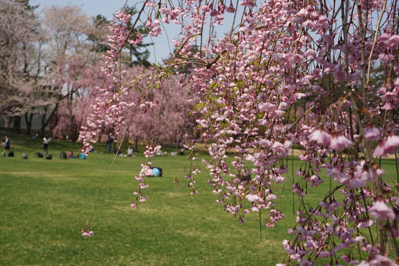 弘前公園 (2018年4月26日 撮影)