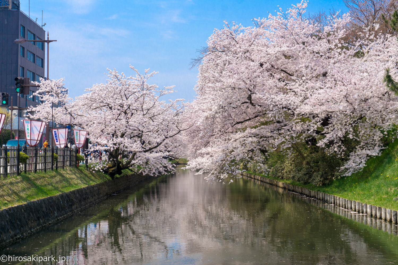 弘前公園の桜 外濠