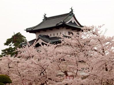 「第29回弘前城ミス桜コンテスト」を開催します