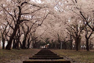 桜林公園(サクラバヤシコウエン)