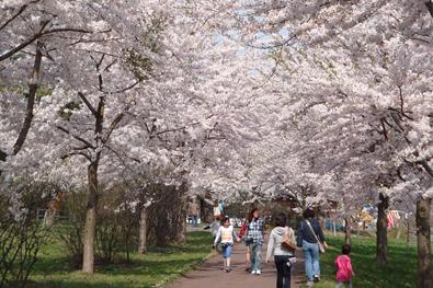 富士見湖パーク(フジミコパーク)