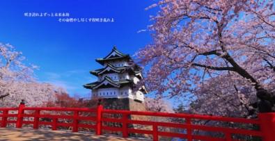 仲宗根翔さん作曲 弘前の桜の歌「桜」が弘前市に提供されました!