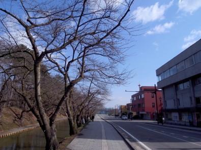 2013年4月15日 弘前市公園緑地課より弘前公園の桜の開花予想が発表されました!