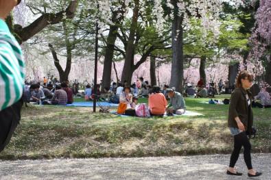 青森県民は日本一お花見が好き!