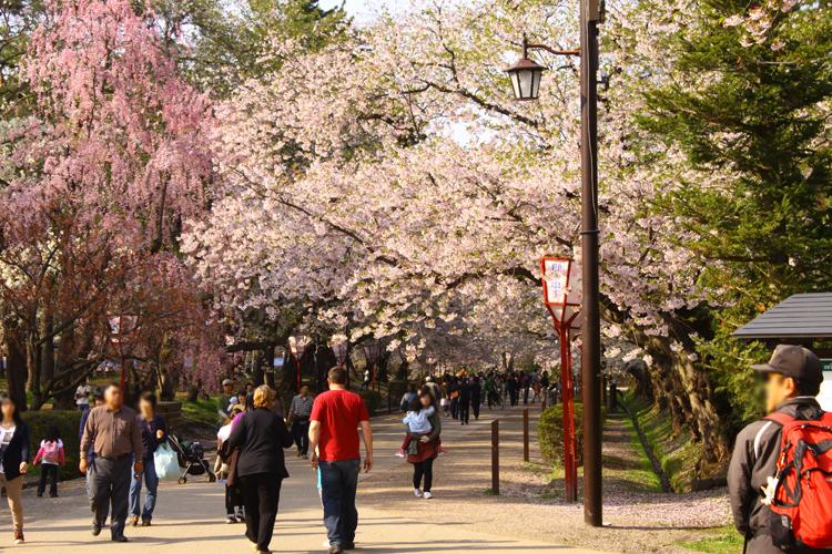 弘前さくらまつりで賑わう追手門付近。花見といったら弘前公園の弘前さくらまつり