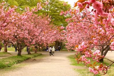 弘前公園 四の丸のアズマニシキ