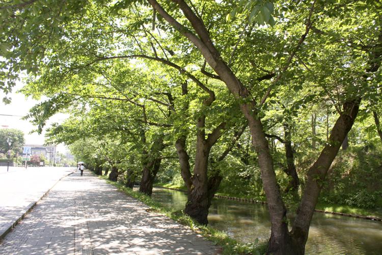 夏の弘前公園外濠
