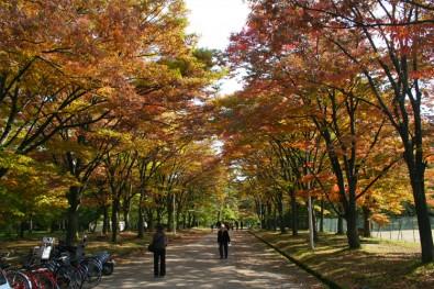 弘前公園 紅葉の秋