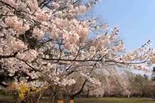 弘前城(弘前公園)「三の丸」