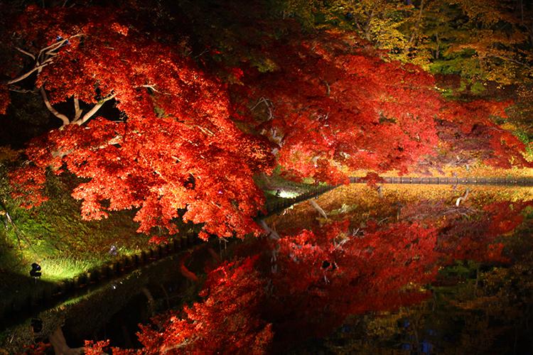 弘前城 菊と紅葉まつり