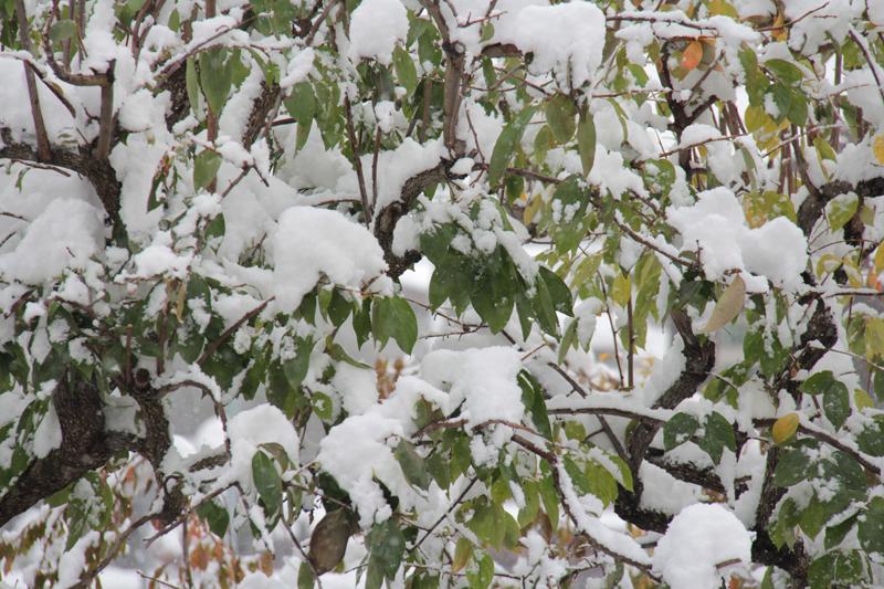 雪と紅葉のコントラスト 弘前市