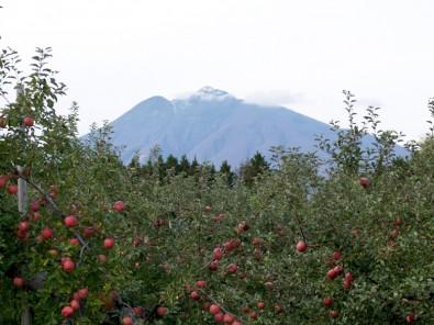 弘前市りんご公園で「りんごテント村・トラック市」