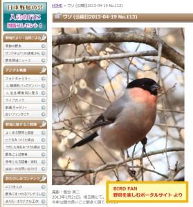 野鳥のウソ BIRD FAN 野鳥を楽しむポータルサイト