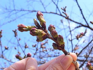 春の庭木剪定講習会
