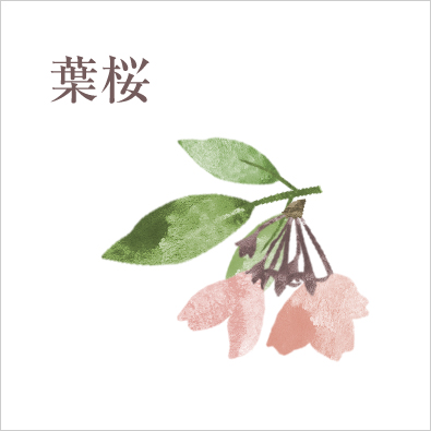 葉桜 意味 桜の花が散り、若葉が出始めた頃~新緑で覆われた状態