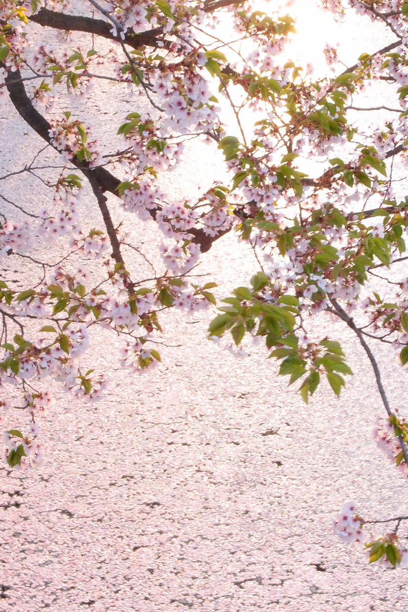 弘前公園(弘前城)・外濠 アップで撮影