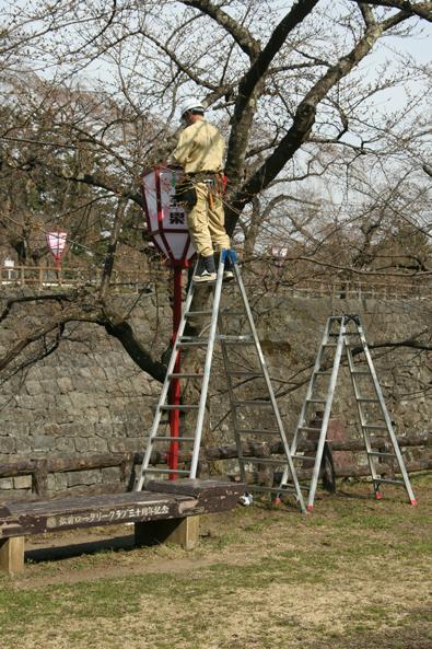 弘前公園・下乗橋付近 ぼんぼりに配電している様子