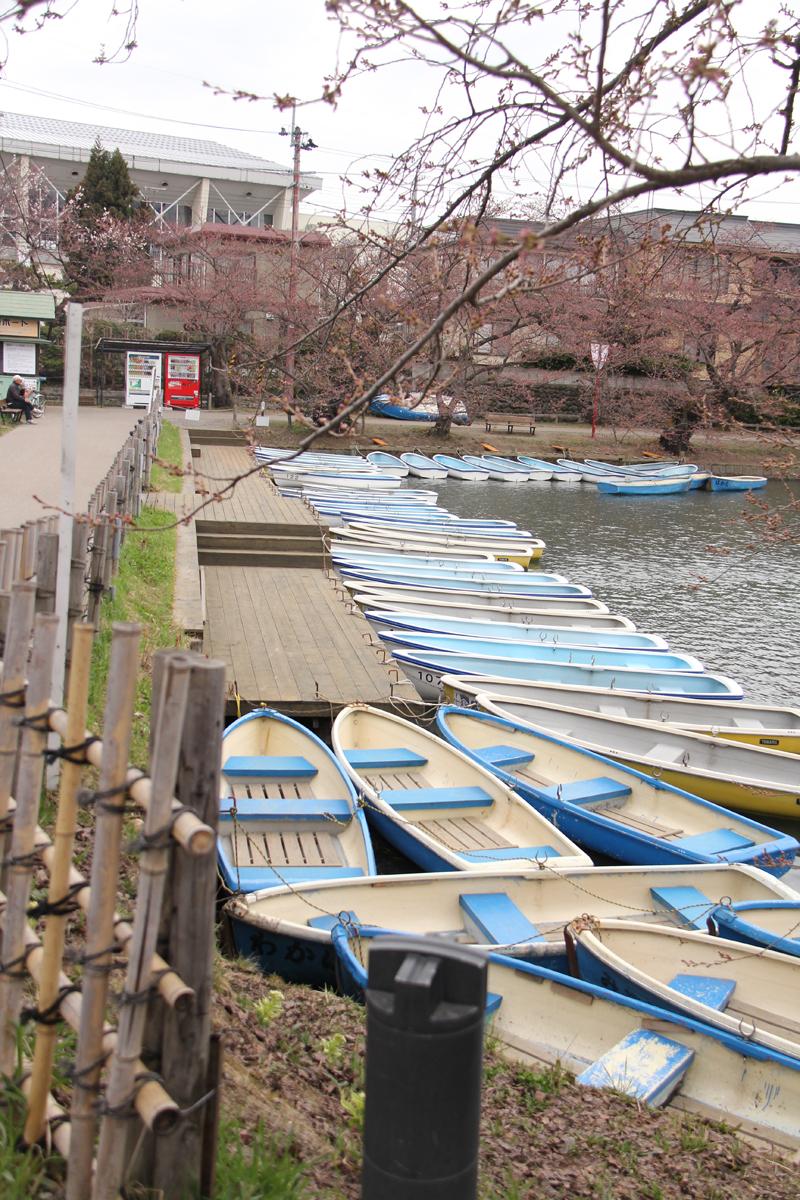 弘前さくらまつり、西濠のボート